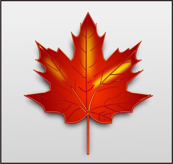 Maple Leaf Free Vector In Open Office Drawing Svg Svg
