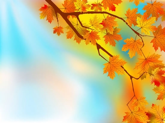 maple leaves background colored elegant decor