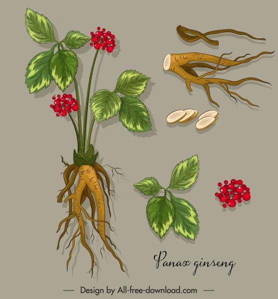 medical plant icons gingseng tree parts sketch