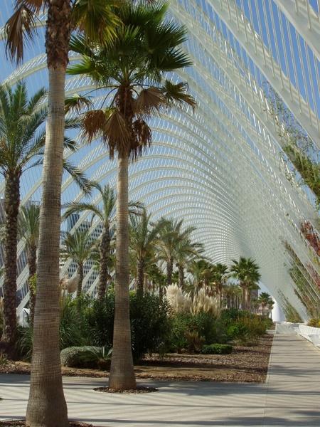 mexico palms palm trees