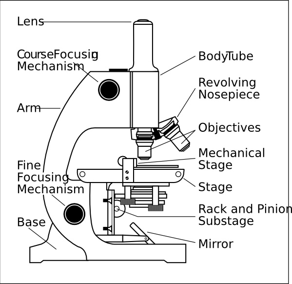 Microscope With Labels clip art Free vector in Open office ...