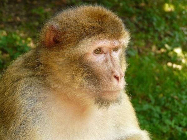 Pic Monkey Download