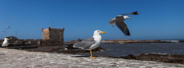 mouettes seagulls