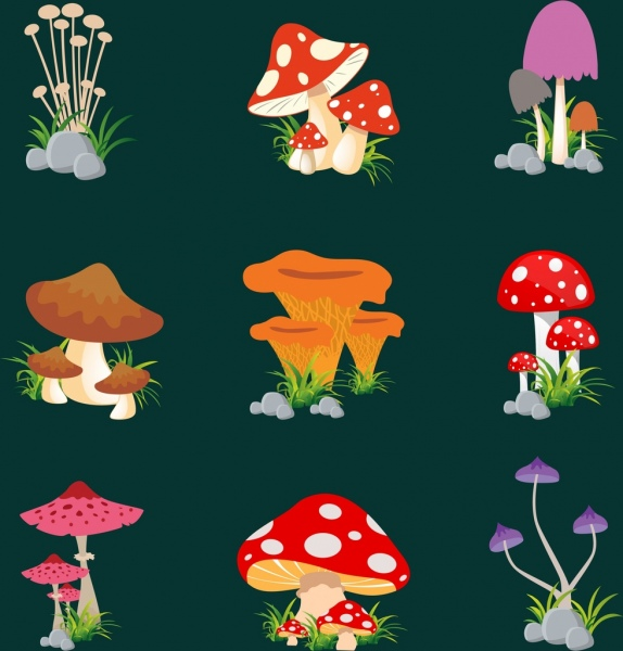 mushroom icons collection various colored types isolation