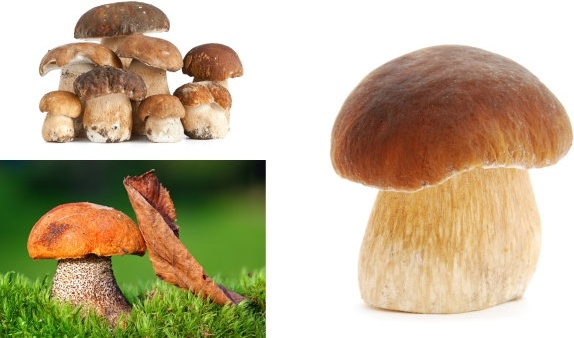 mushrooms hd picture 4