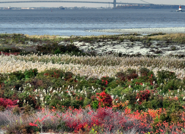 natural garden at the foot of new york harbor