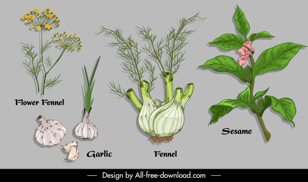 natural herb ingredients icons colored handdrawn design