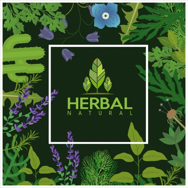natural herbs background green leaves flowers icons decoration