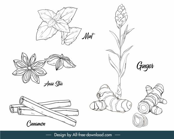 natural herbs icons black white handdrawn outline