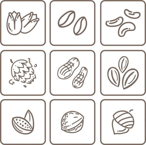 natural nut icons collection flat monochrome sketch