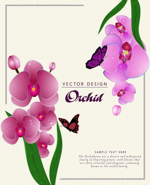 nature background purple orchids flowers ornament