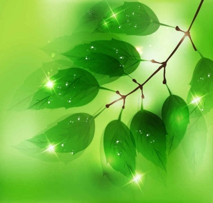 nature background with fresh green leaves vectors