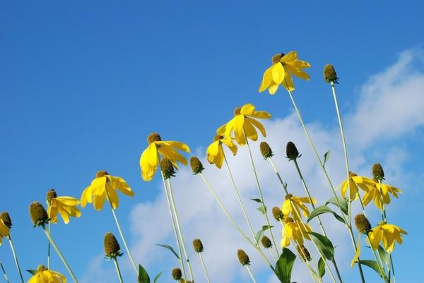 nature flower sky