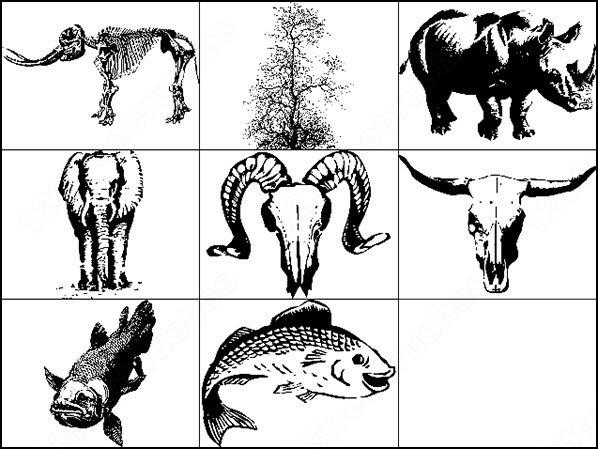nature junk.â fish, tree, skulls and elephant brush