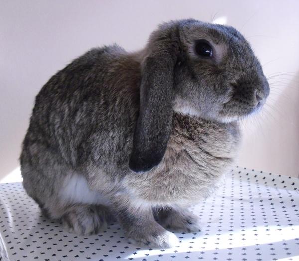 nature rabbit bunny