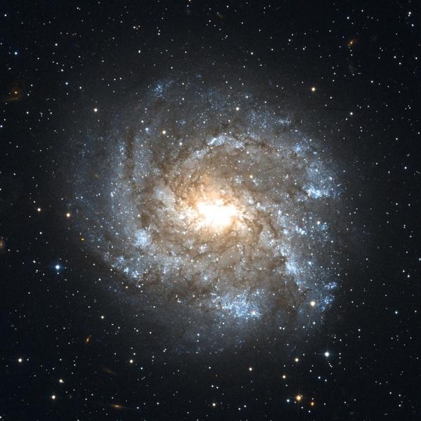 ngc 2082 barred spiral galaxy constellation schwertfisch