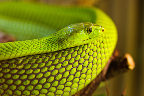 nice green snake
