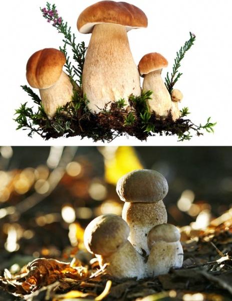 of mushrooms hd photo 1