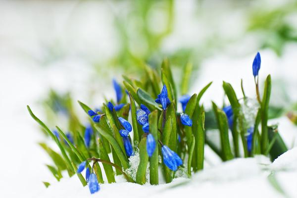 oh spring