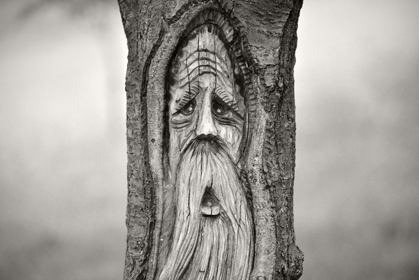 old wise alone