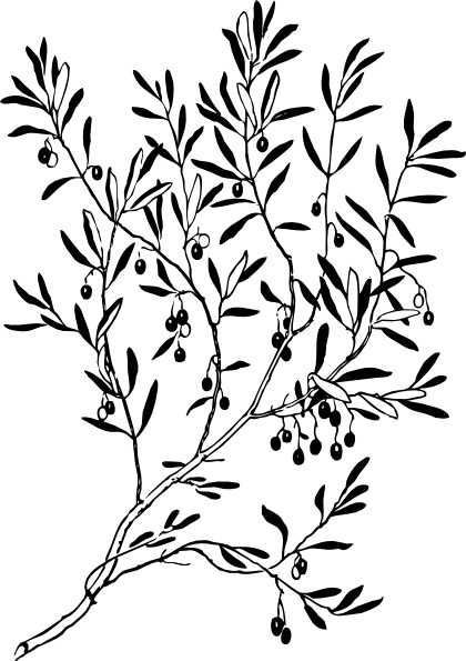 Olive Branch Clip Art Free Vector In Open Office Drawing Svg Svg