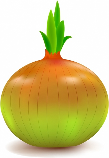onion free vector download 152 free vector for