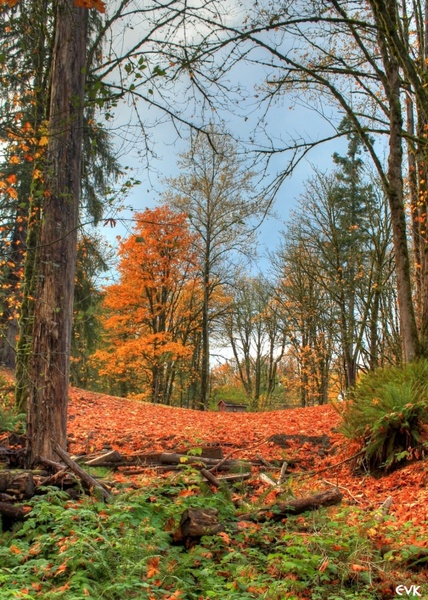 orange autumn trees