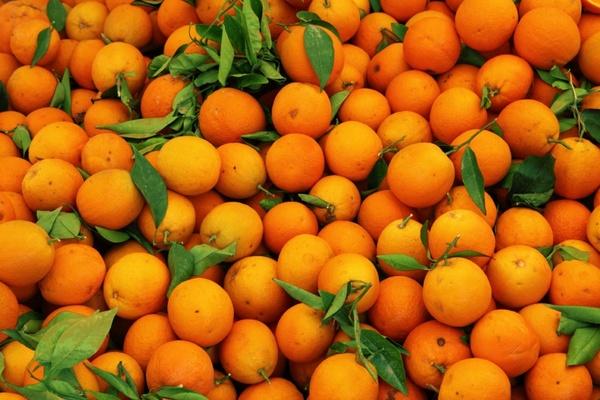 orange fruit pattern