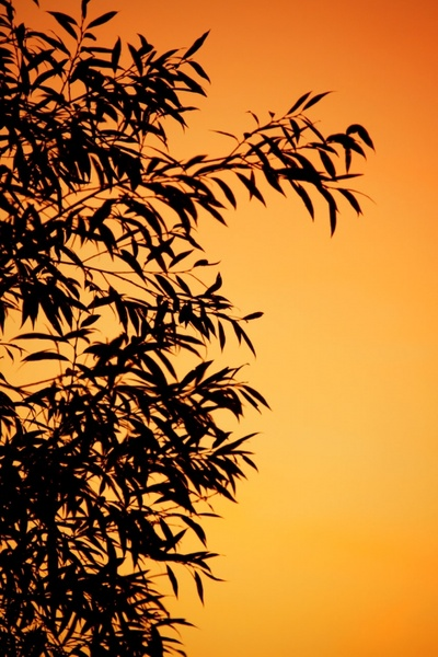 orange leaf silhouette