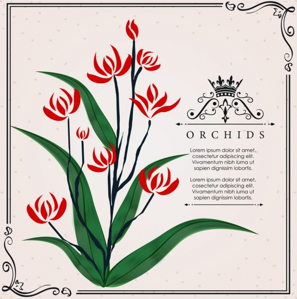 orchid background classical handdrawn design