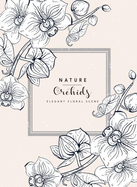 orchids background handdrawn sketch