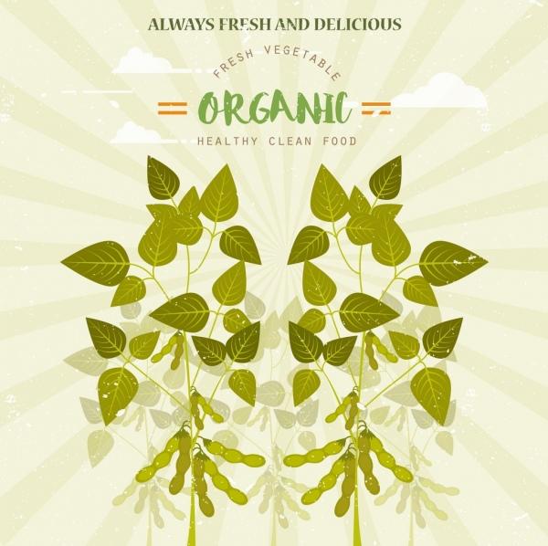 organic food advertisement green soybean icon