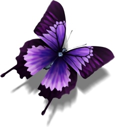 Other Butterfly