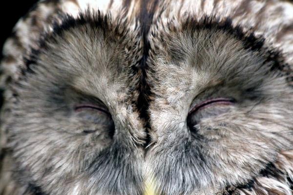 closeup of white feather owl