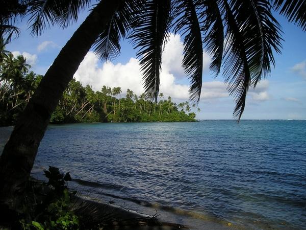 palm sea beach