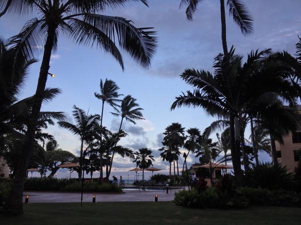 palm tree on resort at dusk
