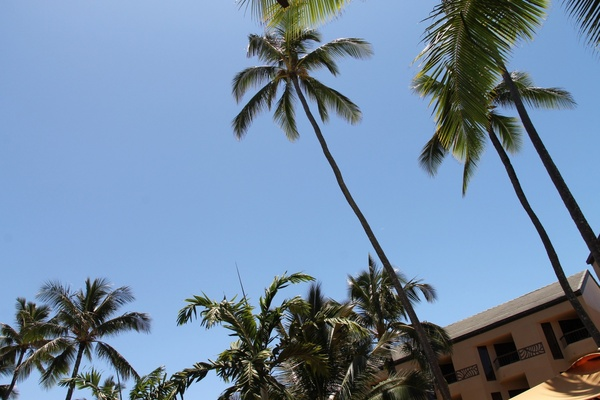 palm trees at hotel