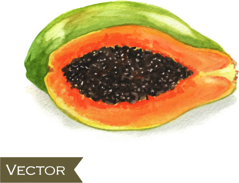 papaya watercolor hand drawn vector