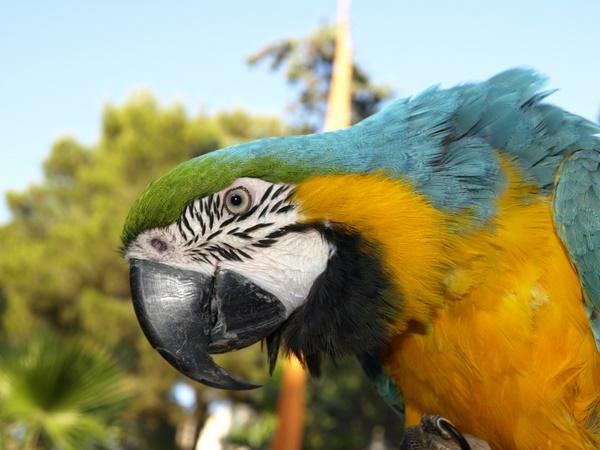 parrot bird ara