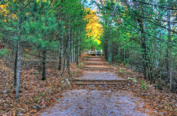 path up to bluff at roche a cri state park wisconsin