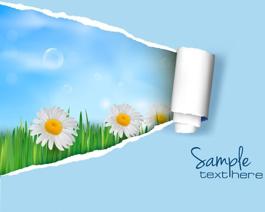 pattern background cover 02 vector