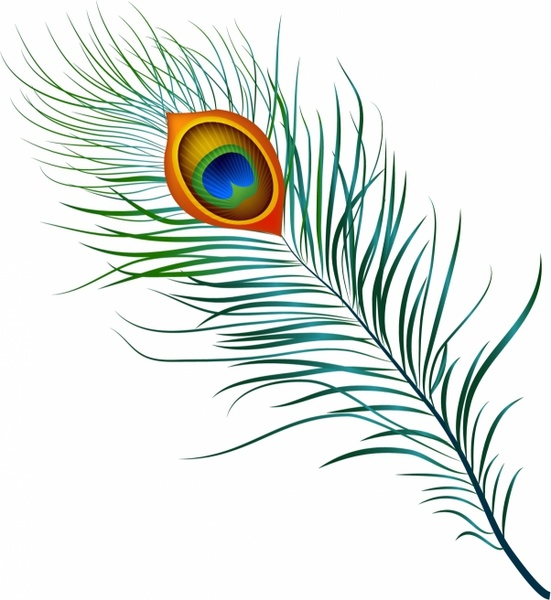 Drawing Lines Using Svg : Peacock feather free vector in adobe illustrator ai