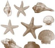 Photoshop Seashell Brushes