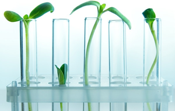 picture of plant in the test tube