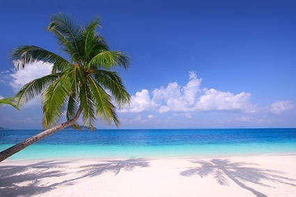 picture of the sandy beach coconut trees