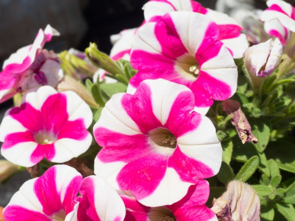 pink and white flowers 2