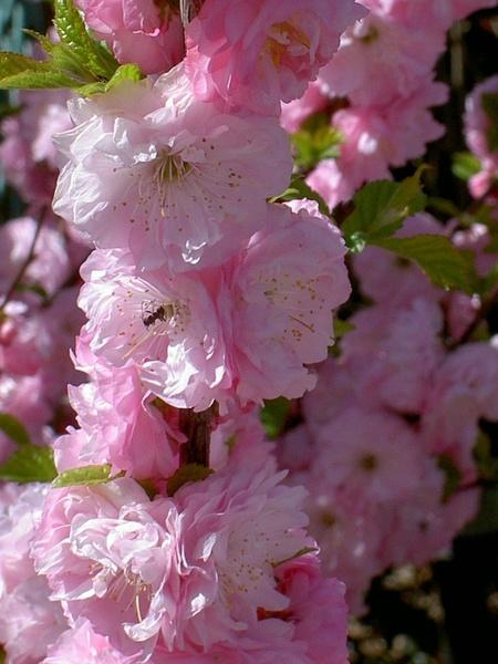 pink bloom flower