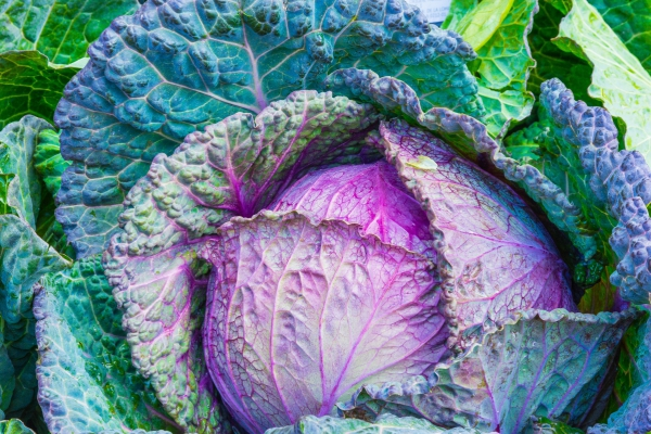 pink cabbage vetgetable texture food background