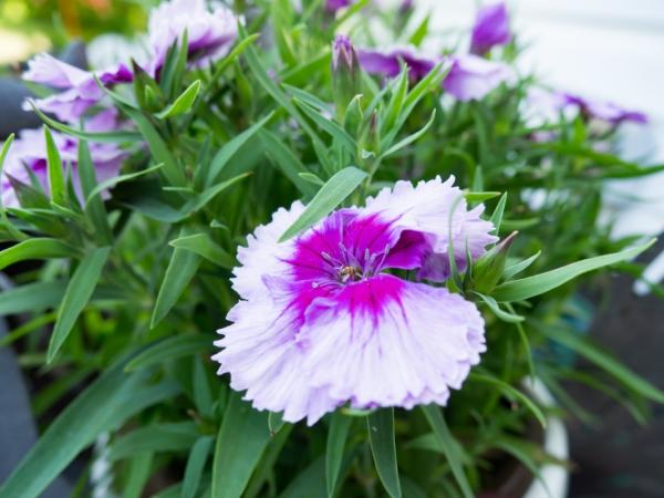 pink flower 3