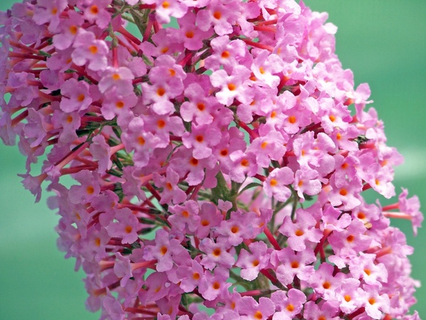 Pink Flowers Free Stock Photos 1 17mb